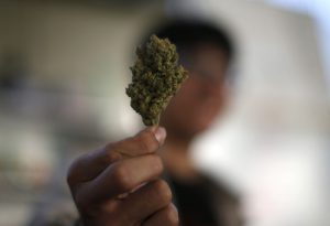 A volunteer holds a dried cannabis bud at the La Brea Collective medical marijuana dispensary in Los Angeles