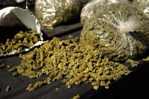 bags-weed-560x372