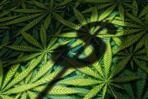 marijuana-industry-jobs-economy-money-1-560x376