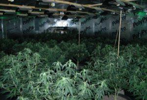 daniel-road-marijuana-grow-1-1-560x380