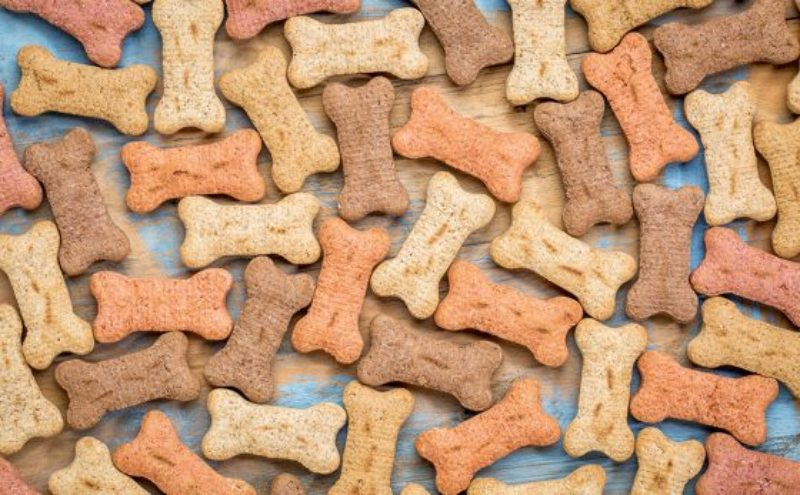 dog-biscuits-560x347