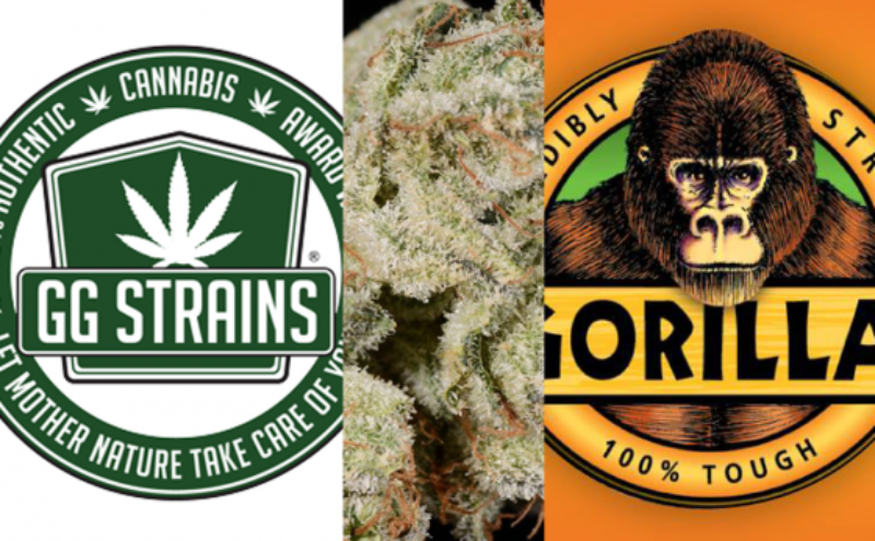 gorilla-glue-marijuana-lawsuit-2-560x347