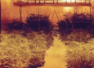 pueblo-illegal-pot-grow-546x400