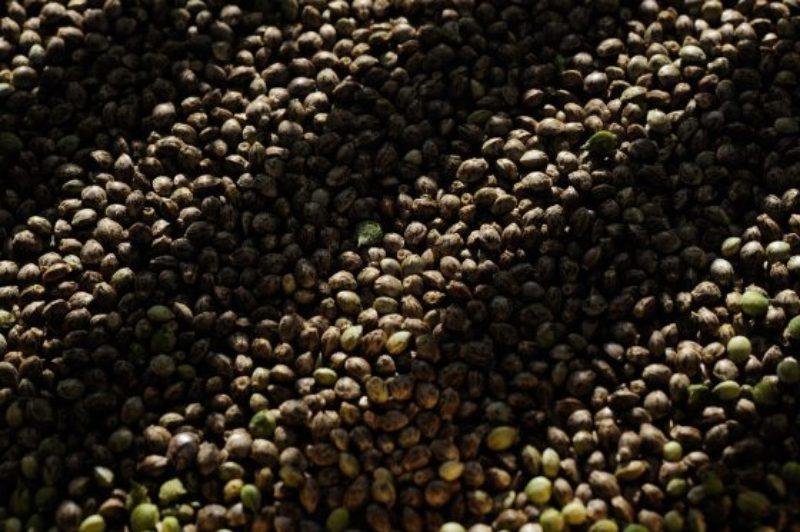 seeds3-560x373
