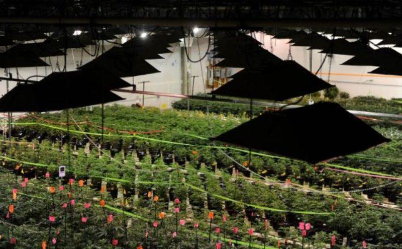 colorado-marijuana-electricity-use-energy-demand-indoor-growing-560x347