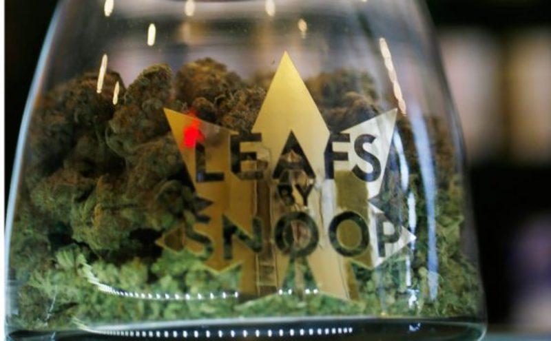 leafs-by-snoop-560x347