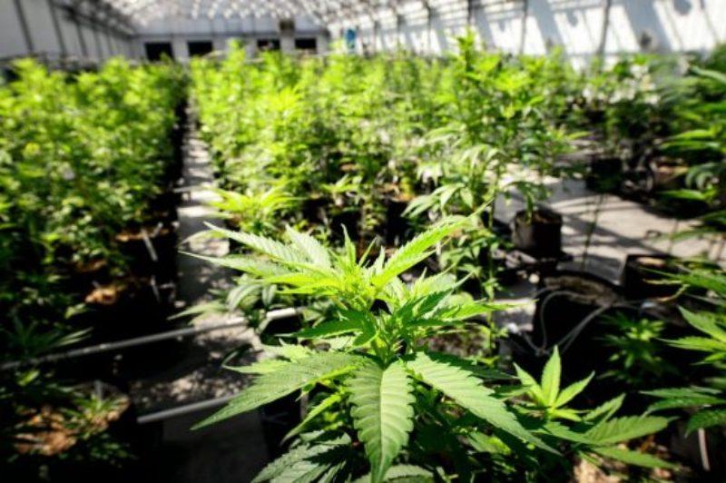 ohio-marijuana-legalization-supreme-court-560x373