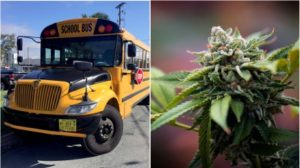 school-bus-marijuana-composite