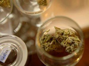 20140702__colorado-recreational-marijuanap1-1-534x400