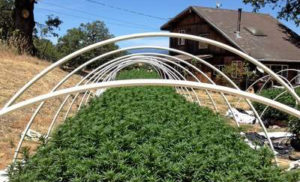 eureka-emerald-triangle-marijuana-raids