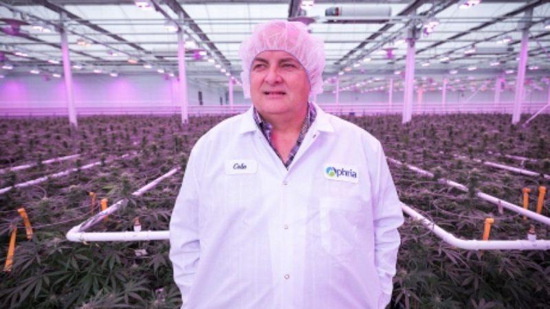 cannabis-canada-cole-cacciavillani-aphria-greenhouses