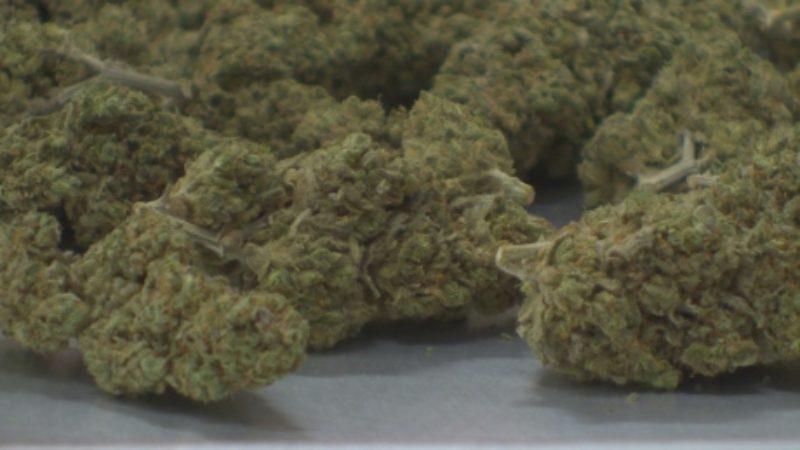 marijuana-in-new-brunswick