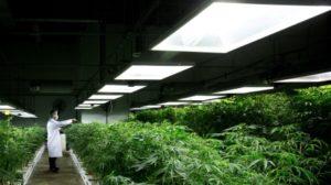 medical-marijuana-20140330-1