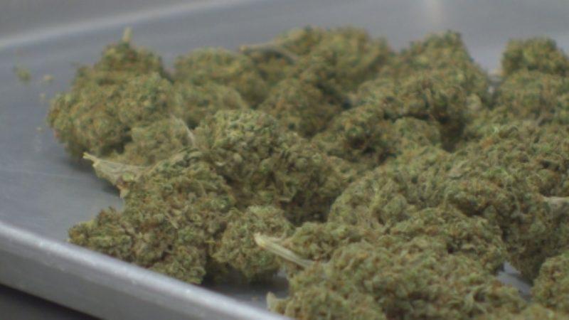 new-brunswick-marijuana