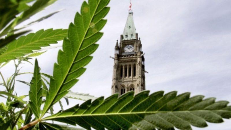 marijuana-pot-parliament-decriminalization
