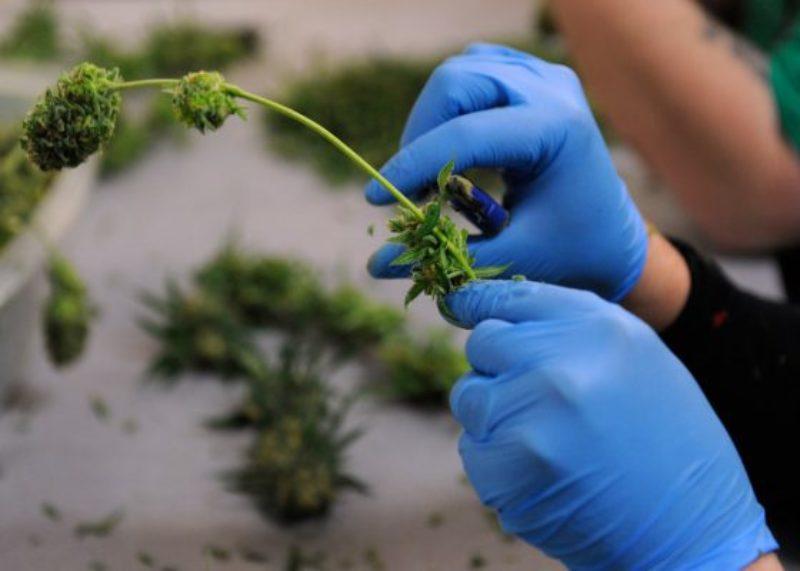 ohio-marijuana-legalization-things-to-know-560x400