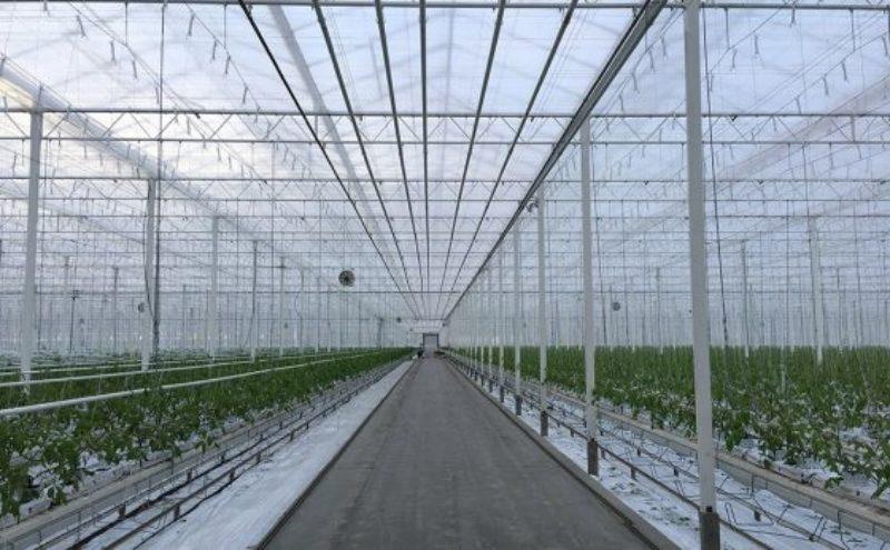 greenhouse1-560x347