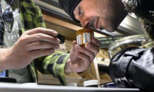 terrapin-care-station-boulder-marijuana-560x336