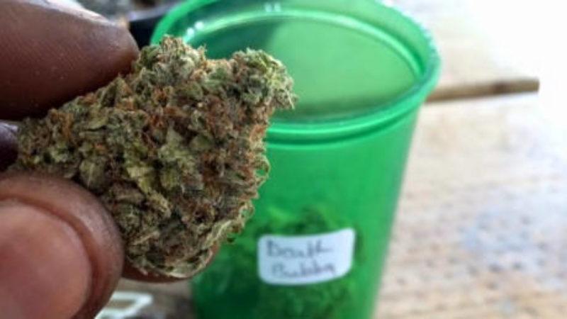 medical-marijuana-nova-scotia-court-decision