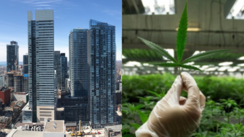 toronto-condos-ban-marijuana
