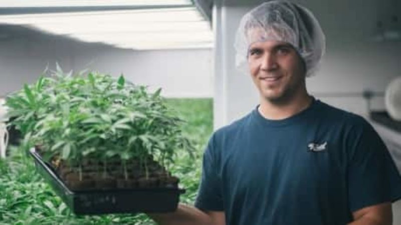 canopy-growth-marijuana-pot