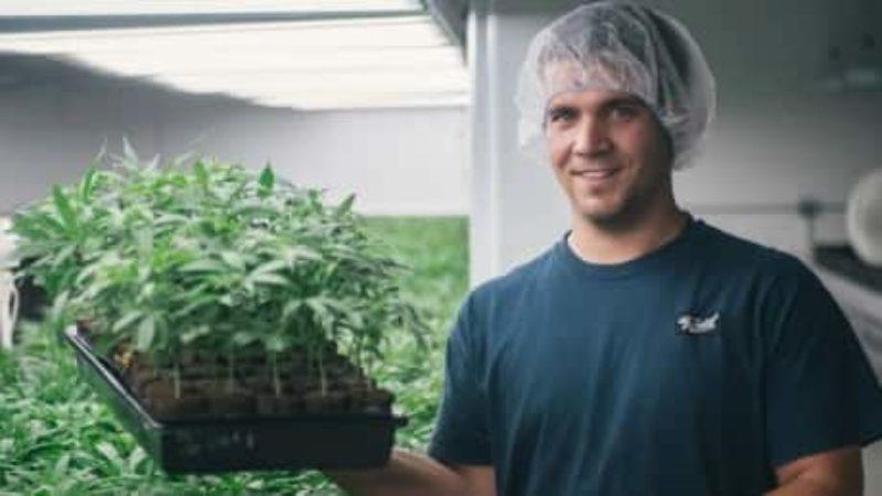 canopy-growth-marijuana-pot