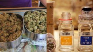 marijuana-drug-testing
