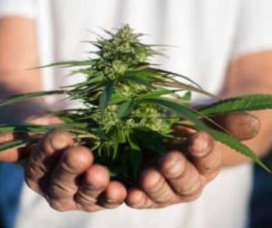 medical-marijuana-20131008