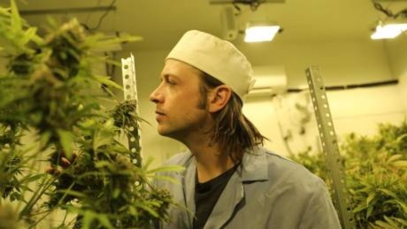 patrick-bonin-examines-his-cannabis-crop