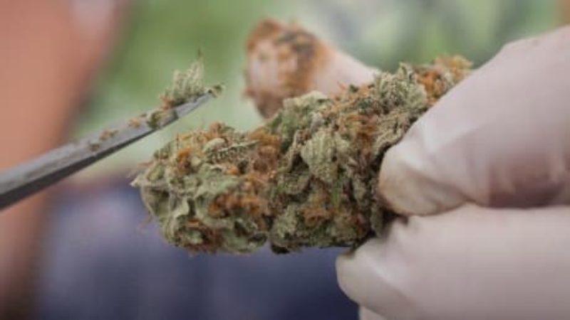 que-cannabis-law-20171116