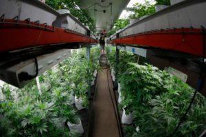 Marijuana_Pesticide_Testing_03416-1-560x373