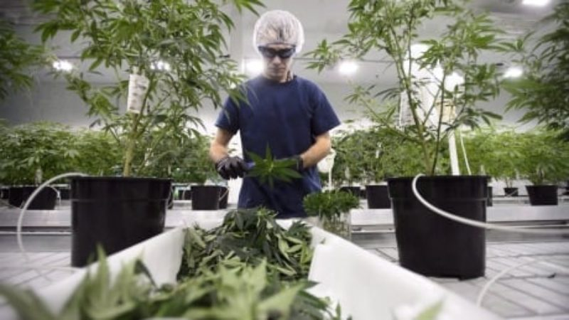 canopy-growth-latin-america-20180705