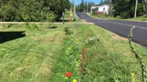 sackville-ditch-flowers