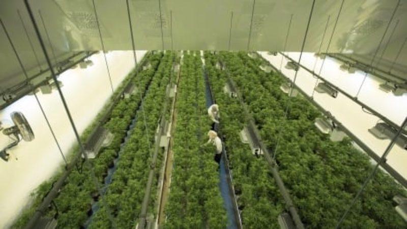 ontario-cannabis-supply-20180905