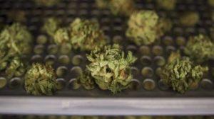 cannabis-ontario-sales-20181019