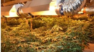 squamish-rcmp-cannabis