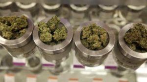 marijuana-bud