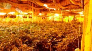 cannabis-grow-up-york-region-2