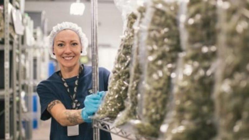 canopy-growth-marijuana