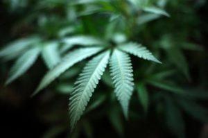 Marijuana_Banking_59967-1-560x373-1