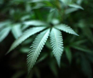 Marijuana_Banking_59967-560x373-1