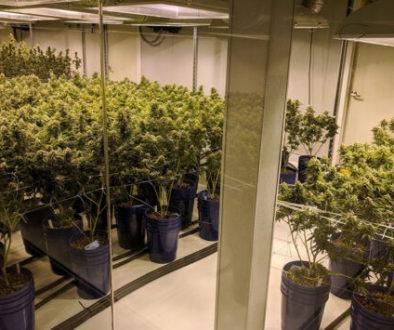 5.11D-Marijuana-560x355-1